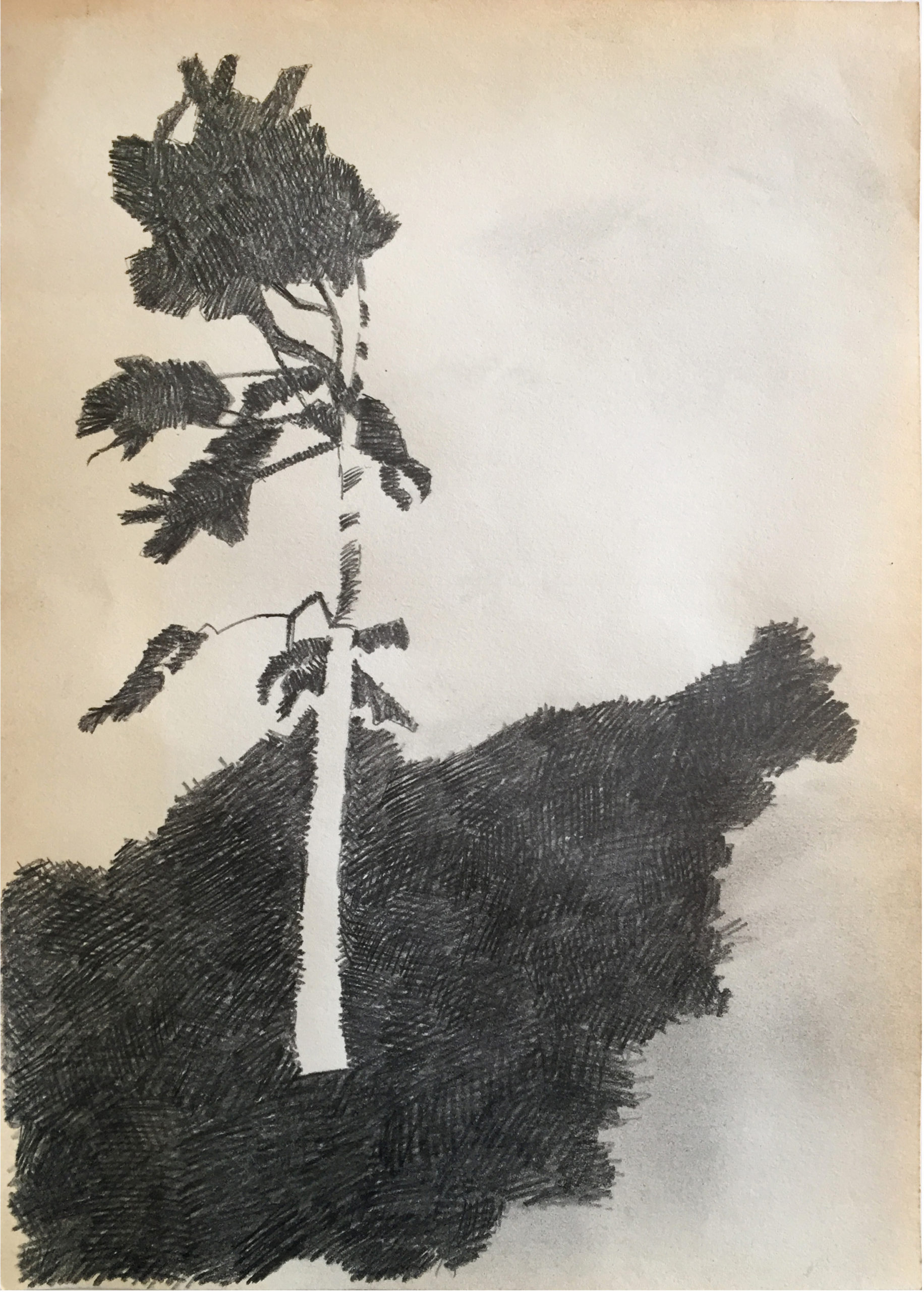 Drawing2021_tree_01