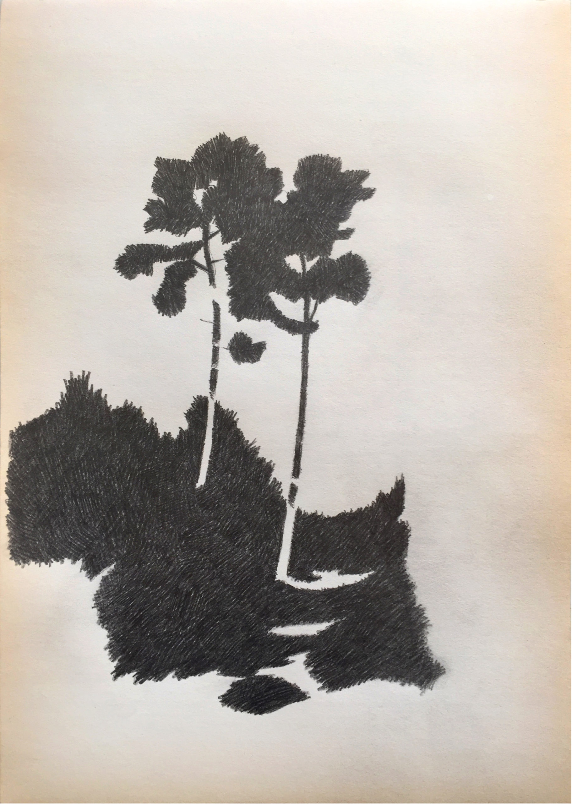 Drawing2021_tree_02